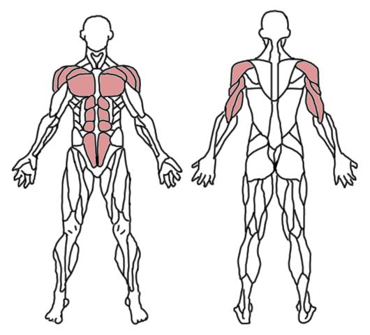 pushups-musculos