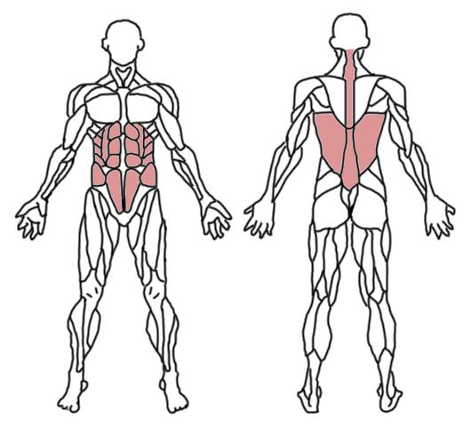 elevacion-piernas-musculos