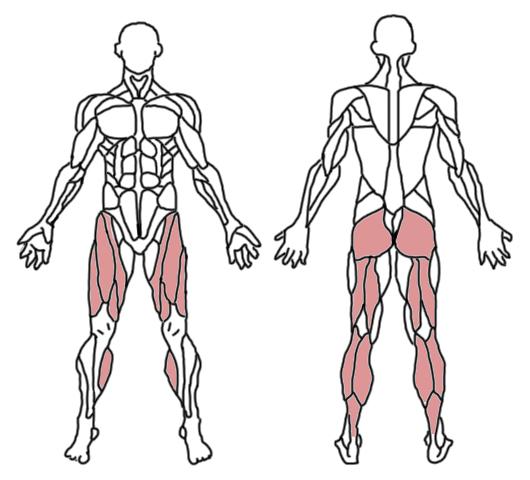 sentadilla-profunda-musculos